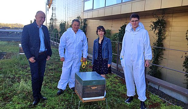 Des ruches sur les toits des entreprises de Normandie