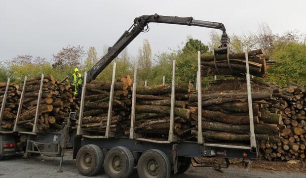 Normandie : 4M€ par an pour la filière bois en forêt