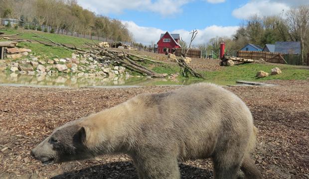 CERZA : une saison 2018 sous le signe de l'ours polaire