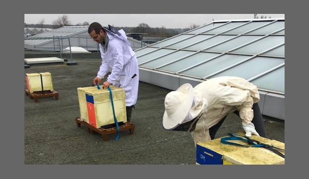 Seine-Maritime : des ruches sur les toits des entreprises