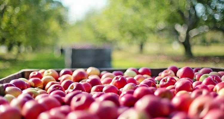 30 millions d'euros pour favoriser l'accès à tous des aliments frais et locaux !